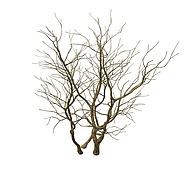 枯树3D模型3d模型