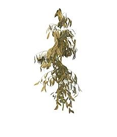 枯叶灌木3d模型