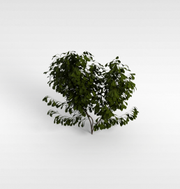 3d大叶片灌木模型