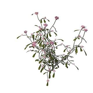 粉色小花3d模型
