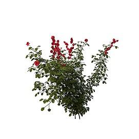 红花灌木3d模型