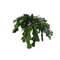 绿色灌木3D模型3d模型