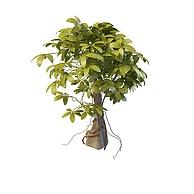 仿真树3D模型3d模型