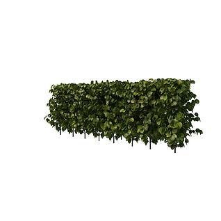 大叶灌木3d模型