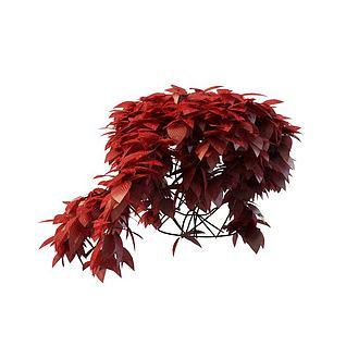 红色植物3d模型