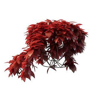 红色<font class='myIsRed'>植物</font>3d模型
