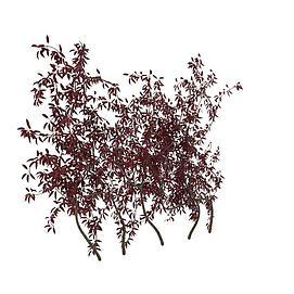 紫叶矮樱模型