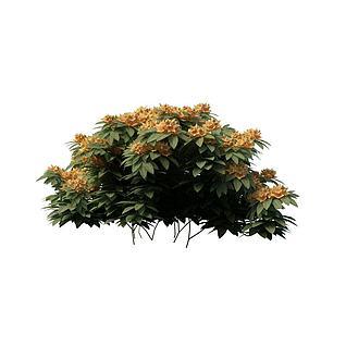 观花灌木3d模型