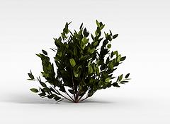观叶灌木3D模型3d模型