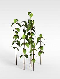 3d树苗模型