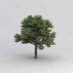 香樟树3D模型3d模型