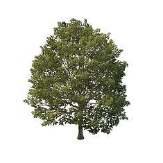 园林树木3D模型3d模型