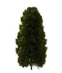 松树模型3d模型