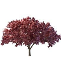红树模型3d模型