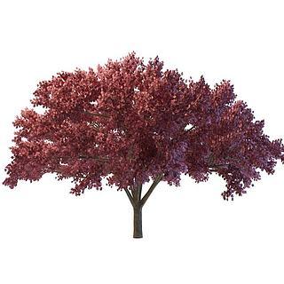 红<font class='myIsRed'>树</font>3d模型