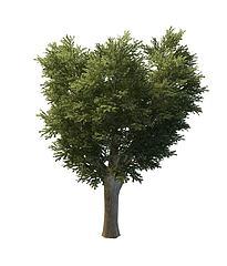 园林树模型3d模型