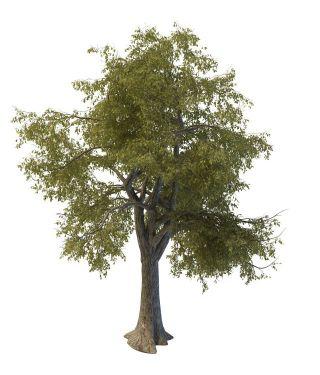 绿化树木名称及图片