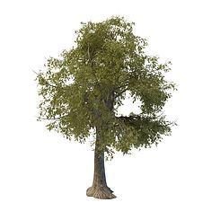 绿化树木3D模型3d模型