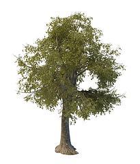 绿化树木模型3d模型