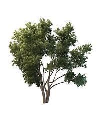 园林景观树模型3d模型
