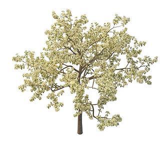 樱桃<font class='myIsRed'>树</font>3d模型