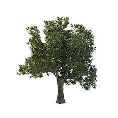 茂盛大树3D模型3d模型