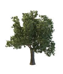 茂盛大树模型3d模型