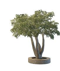 古树模型3d模型