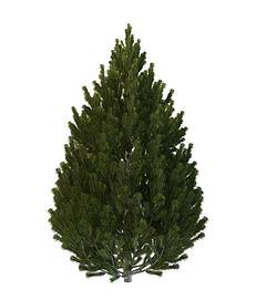 小型灌木3d模型