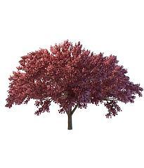 红叶树模型3d模型