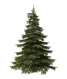 松树3d模型