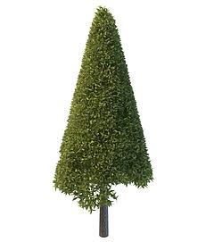 锥形大树3d模型