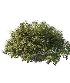 茂盛灌木3d模型