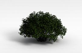 3d茂盛灌木模型