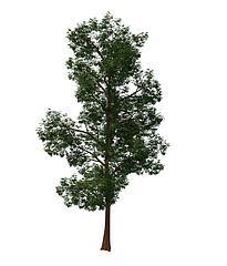绿化树模型3d模型