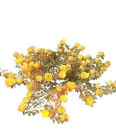 黄色玫瑰花3d模型