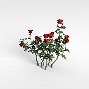 玫瑰花模型
