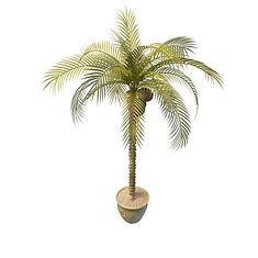 椰子树3D模型3d模型