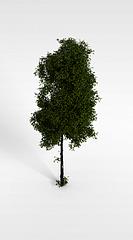 园林树木模型3d模型