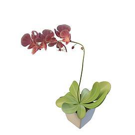 室内盆栽3d模型
