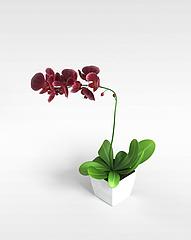 室内盆栽模型3d模型