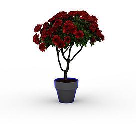 红牡丹3d模型