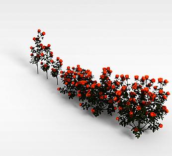 橘色玫瑰花