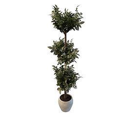室内仿真盆栽3d模型