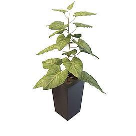 大叶子盆栽3d模型