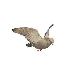 鸽子3d模型