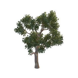 桉<font class='myIsRed'>树</font>3d模型