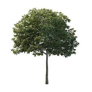 山梨<font class='myIsRed'>树</font>3d模型