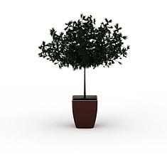 松树盆栽3D模型3d模型