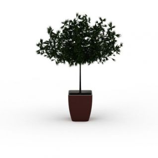 松树盆栽3d模型